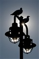 Lamp with seagulls