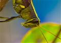Obscure Bird Grasshopper, Biloxi Garden
