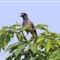 Raami Bird