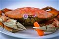 Classy Crab