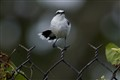 Bird in the enclosure fence