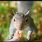squirrel-closeup