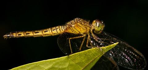 Dragonfly2 web