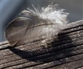 feather on the bench