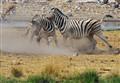 Zebra wars