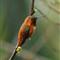 Kolibri_Beercan
