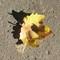 IMG_8333_aut_leaf