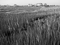 Photo of wetland in West Ocean City Maryland during the early morning.