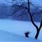schoolyard in a snowstorm