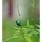 31 august 2013 jewelbug 1