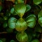 Jade-Plant-2017-Web
