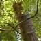 TeaGarden_TreeTrunk