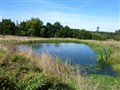 wildlife_pond[1]