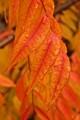 Rain splashed autumn leaves 3