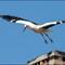 Storck family