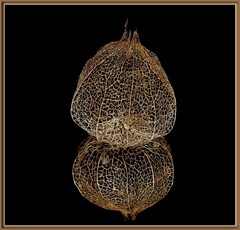 Sophisticated construction by the nature