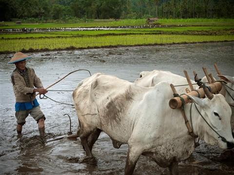 indonesia2011_039
