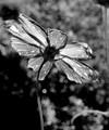 Nature Black & White