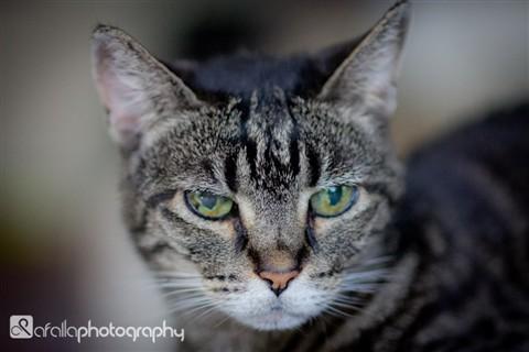 Portfolio_Pets-6