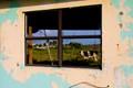 Cayman Cow