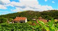 My family vineyard