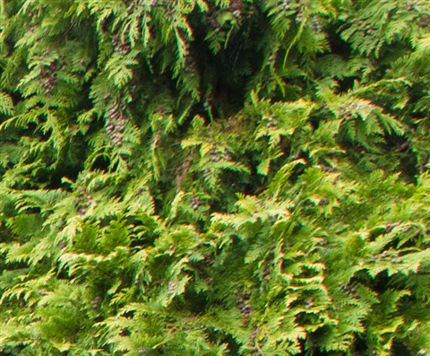 9_18_tree_crop