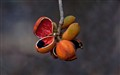 Seed pods_1321