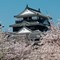 Matsuyam Castle cherry blossoms R1001040