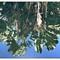 Rio Botanical Garden FULL reflections borders