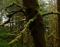 Spooky Moss Tree