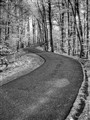 IMG_3618_IR_B&W_HDR - Mine Falls Park, Nashua, NH