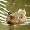 The ugly duck: