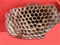 An Art Form of Nature/The  Artist: Leonardo de PAPER WASP