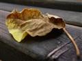Leaf on bench