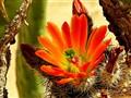 Cactus Revelation