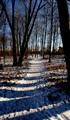 small road in winter