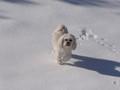 Dog enjoying snow land