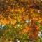 Autumn Magnificence    10 08 2015    002