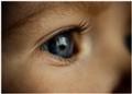 Julia's eye