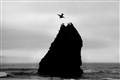 Rock & Pelican