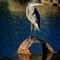Heron and Ducks-20150806-0011
