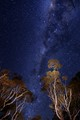 a night among the gumtrees