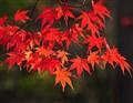 Charming autumn