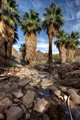 Palm Canyon