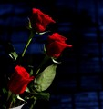 Rose's and love