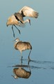 Leap Frog, Crane Style