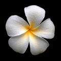 flower & drops_MG_7052crop
