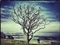 Tree edit