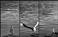 Sample OWIL