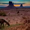 Wild Horses of Monument Valley-4253